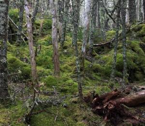 QuoddyHead3 Moss